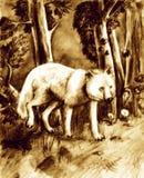 волк пущи Стоковая Фотография