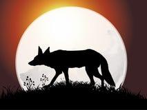 волк силуэта Стоковая Фотография