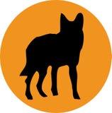 волк солнца собаки Стоковые Изображения