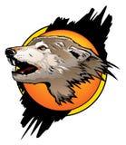 волк цвета Стоковая Фотография RF