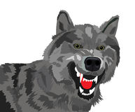 волк Стоковое Изображение RF