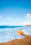 волна starfish пляжа предпосылки Стоковые Изображения RF