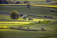 Волнистые поля, картины сказки Стоковое Изображение RF