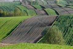 Волнистые поля, картины сказки Стоковые Изображения RF