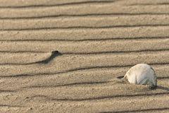 Волны в песке Стоковые Изображения RF
