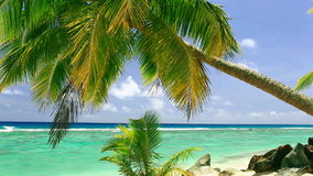Волны на тропическом пляже