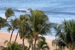 волны песка ладоней стоковая фотография rf