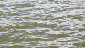 волны поверхностной вода узкой части макроса поля глубины акции видеоматериалы