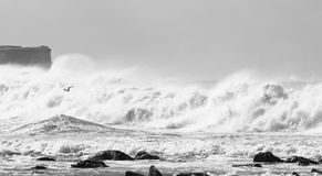 волны свободного полета турбулентные Стоковые Фото