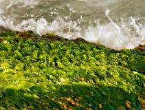 волны seaweeds seashore стоковые изображения