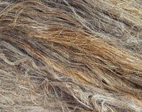 Волокна льна стоковая фотография