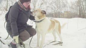 Волонтер женщины штрихуя собаку отключения сток-видео