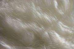 волосы кота Стоковое фото RF
