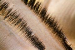 волосы осла Стоковое фото RF