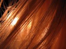 волосы Стоковое Изображение