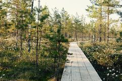 Волшебное раздумье болота леса цветка и расслабляющее изображение Стоковые Фотографии RF