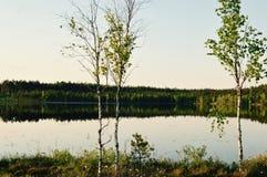 Волшебное раздумье озера леса березы и расслабляющее изображение Стоковые Изображения RF