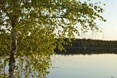 Волшебное раздумье озера леса березы и расслабляющее изображение Стоковая Фотография RF