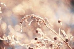 Волшебные цветки в ледяной сверкнать на красивой естественной предпосылке Фото искусства Селективный фокус стоковые изображения