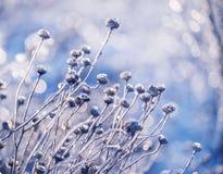 Волшебные цветки в ледяной сверкнать стоковое изображение rf