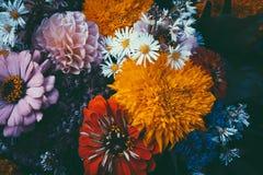 Волшебные цветки с темной предпосылкой листьев Стоковые Изображения