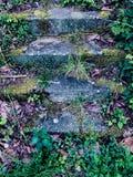 Волшебные шаги стоковое изображение rf