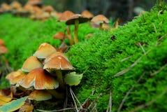 волшебный гриб Стоковое Изображение