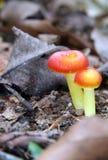 волшебный гриб стоковая фотография