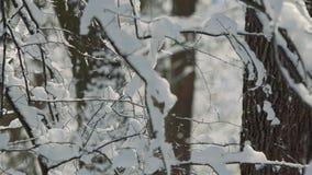 Волшебный заморозок утра взгляда зимы акции видеоматериалы
