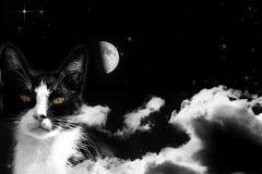 Волшебный кот на пасмурном небе Стоковое фото RF