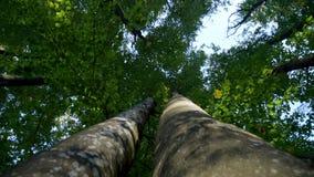 Волшебный лес горы при деревья растя на холмах Съемка карданного подвеса сток-видео