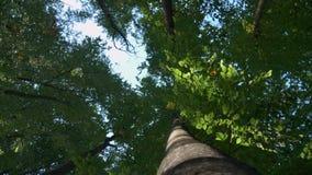 Волшебный лес горы при деревья растя на холмах Съемка карданного подвеса акции видеоматериалы