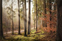 Волшебный лес на autumn& x27; пейзаж s стоковое изображение