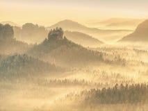 Волшебный лес осени с лучами солнца в утре стоковое фото rf
