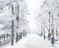Волшебный парк города зимы накаляя солнечным светом Ландшафт городка Snowy Красивые деревья в влиянии солнца backlighting замороз Стоковое Изображение RF