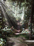 Волшебный пруд Стоковое Фото