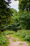 Волшебный путь пущи Стоковая Фотография RF