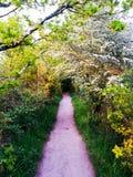 Волшебный путь Стоковое Фото