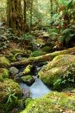 волшебный дождевый лес Стоковое Изображение RF