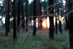 Волшебство леса стоковая фотография