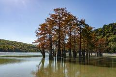 Волшебство distichum Taxodium кипариса болота появляется осенью Красные и оранжевые иглы кипариса стоковая фотография