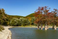 Волшебство distichum Taxodium кипариса болота появляется осенью Красный и оранжевый кипарис стоковые фотографии rf