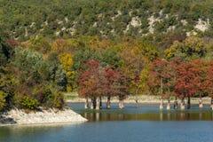 Волшебство distichum Taxodium кипариса болота появляется осенью стоковые изображения