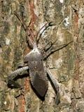 вонь bug1 Стоковое Изображение RF