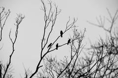 Воодушевленность вороны стоковое изображение rf