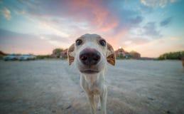 Воодушевленный щенок Стоковое Фото