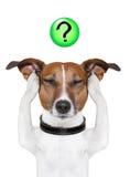 Вопросительный знак собаки Стоковые Изображения RF