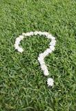 Вопросительный знак сделанный от цветков маргаритки Стоковые Изображения RF