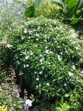 Воплощения сада Стоковые Фотографии RF
