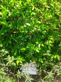Воплощения сада Стоковое фото RF
